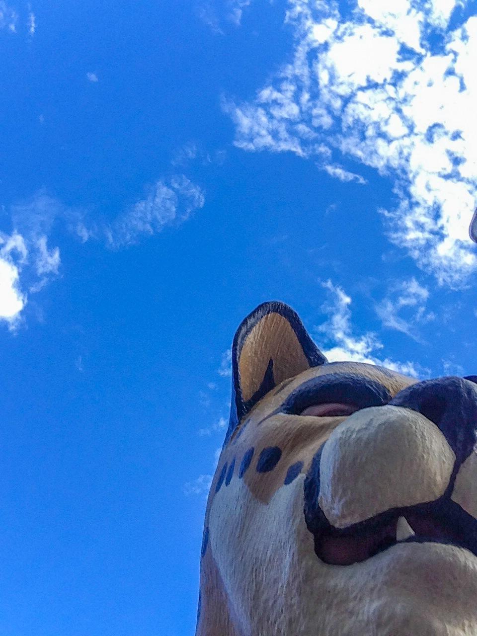 Accidental Selfie