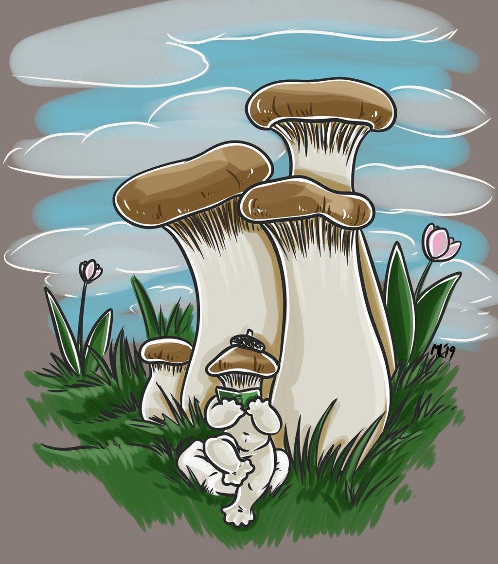 Mayshroom king oyster