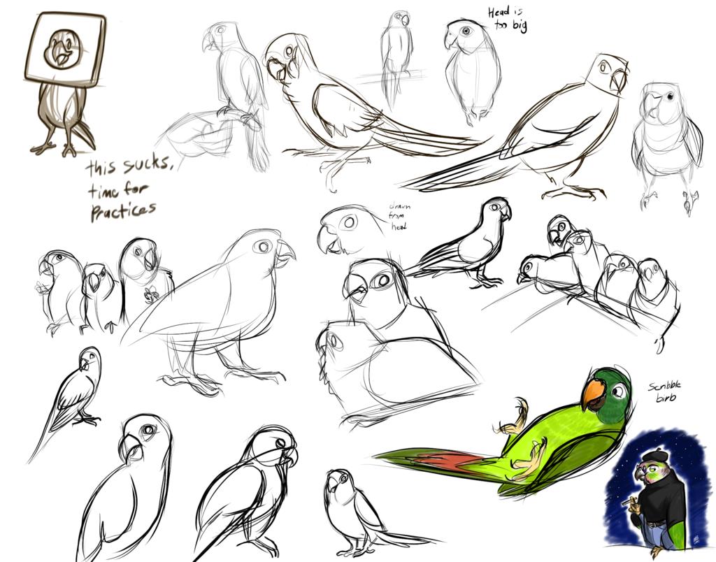 Parrot Studies 1/26/16