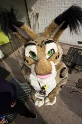 Kitty stare at Animus 2015 furry con