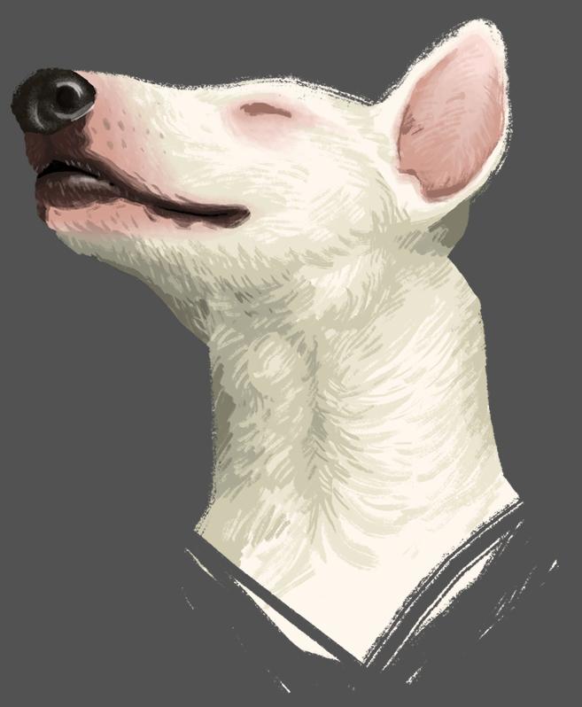 Most recent image: Dog
