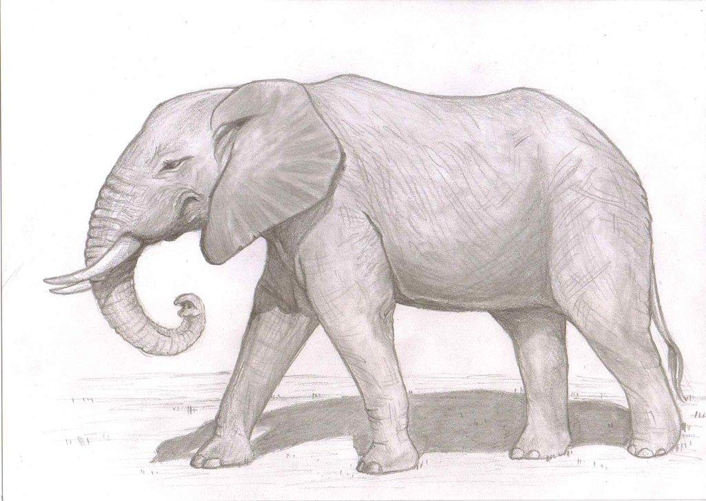 Most recent image: Elephant