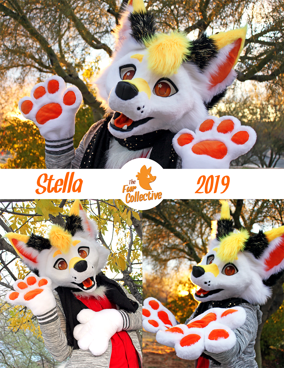 Stella the Fox!