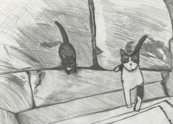 Cats at my Door