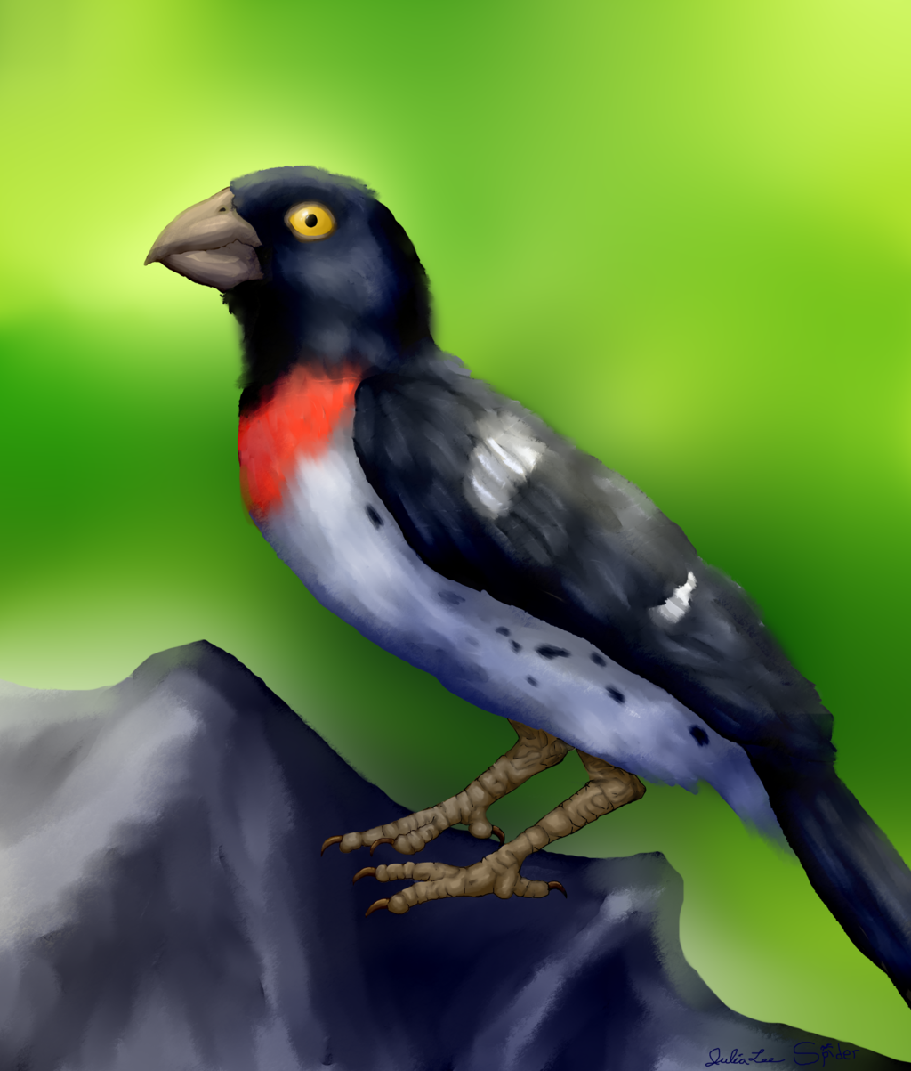 Rose-Breasted Grosbeak Painting
