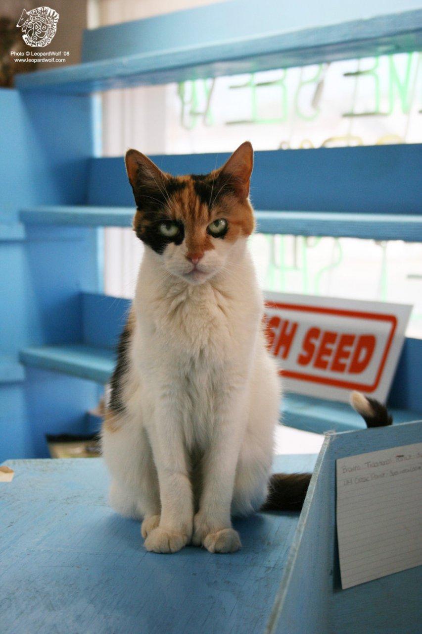 Featured image: Cali Cat