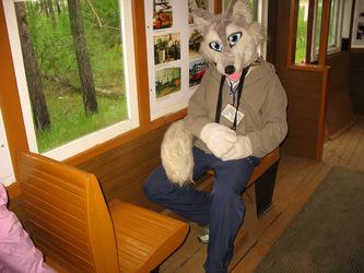 Old tram through forest