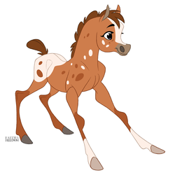 Appaloosa Filly