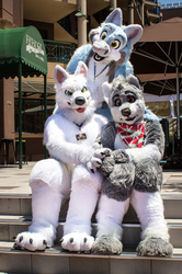 ConFurgence: The Trio