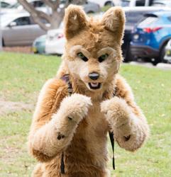 DecemFUR: Chay Fuzz Dingo