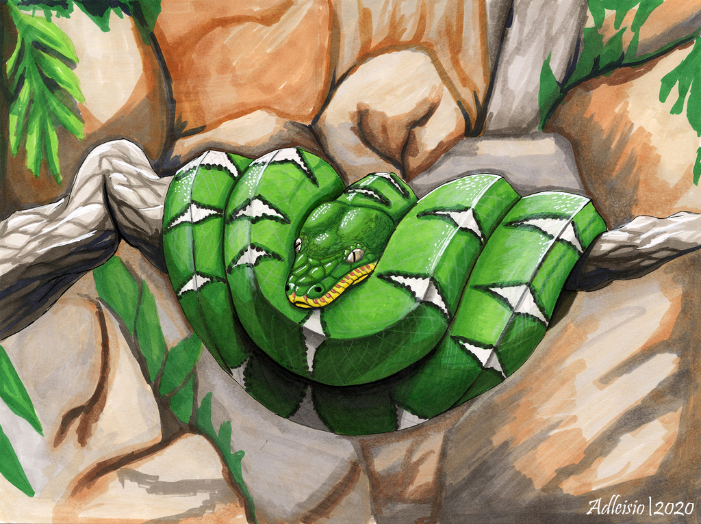 Most recent image: Emerald Tree Boa - Artists for the Amazon