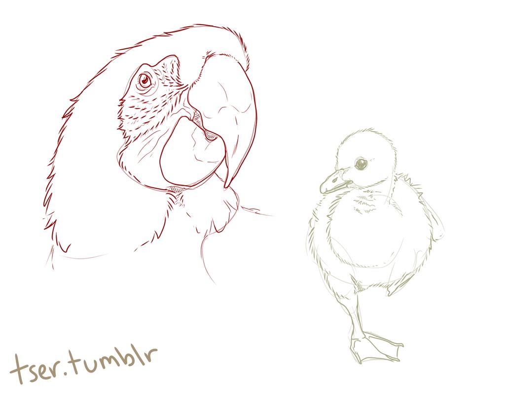 Decembird Sketches