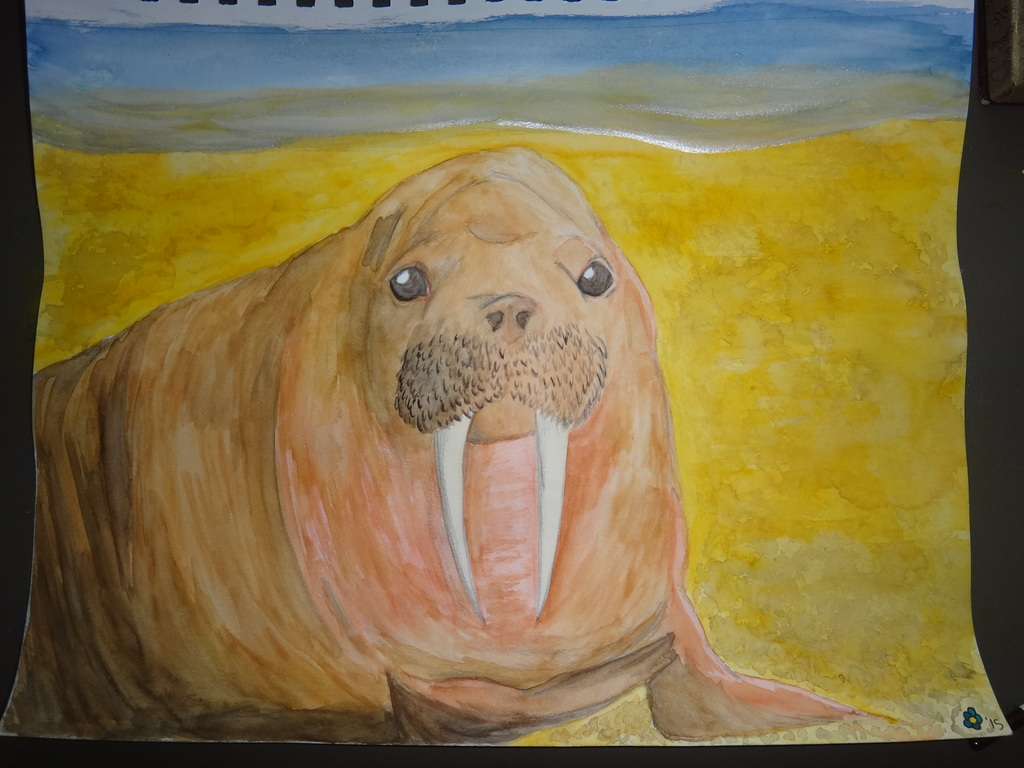 Walrus Watercolor