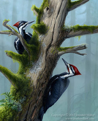 Forest's Benefaction - Pileated Woodpeckers