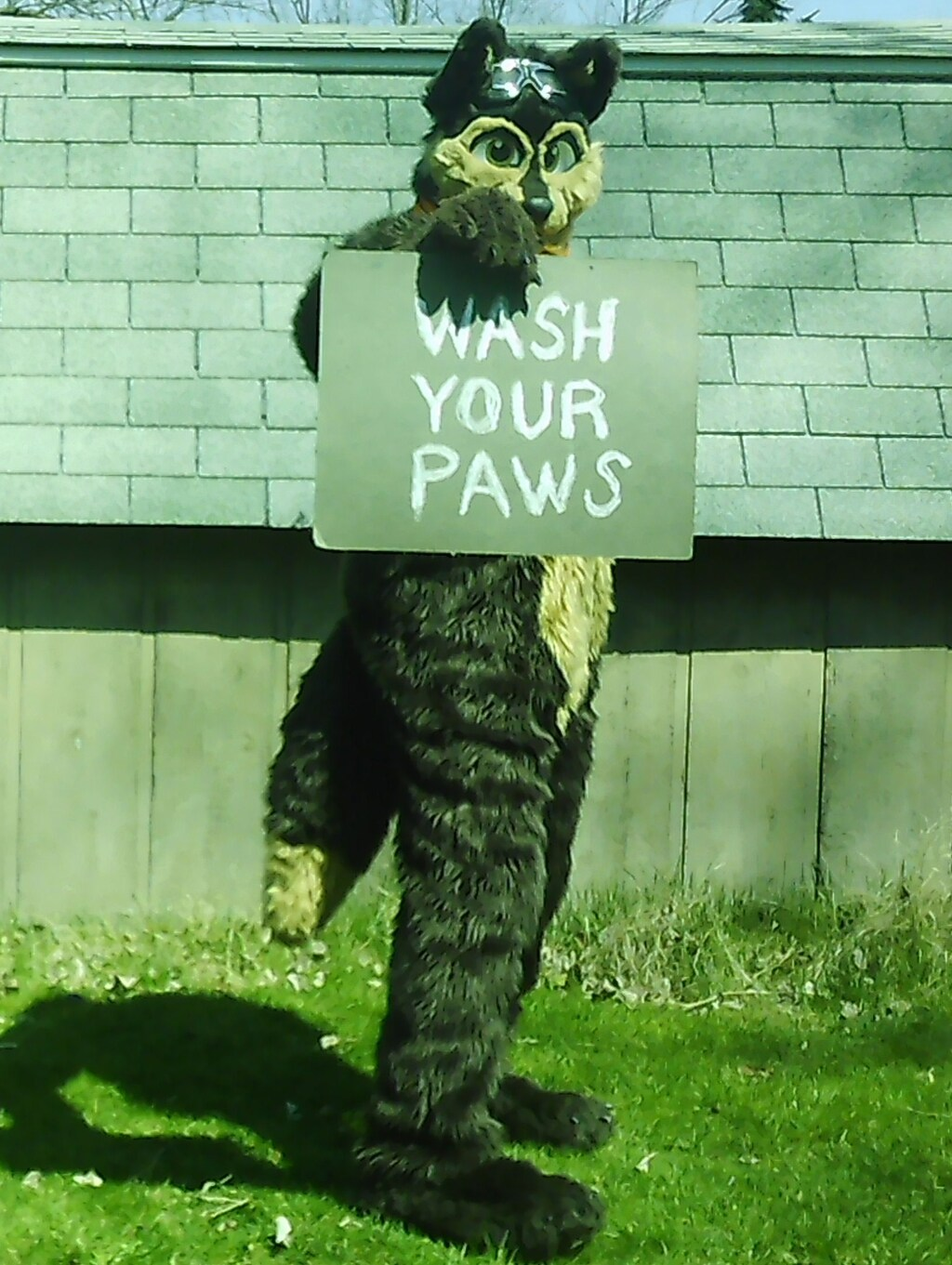 Most recent image: Wee Paws For This Brief Message