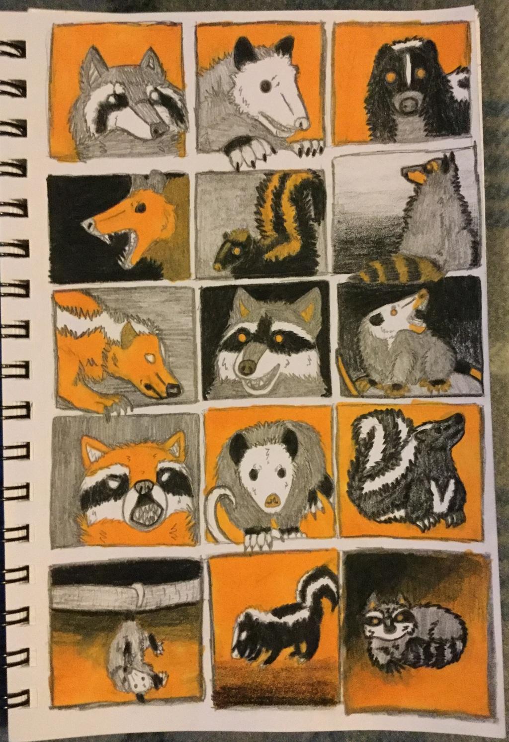 Raccoon, Opossum, and Skunk Thumbnails