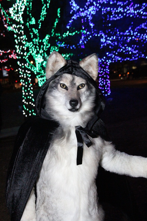 Christmas wolf in Chicago