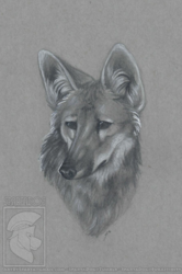 Maned Wolf - AC Art Show 2016