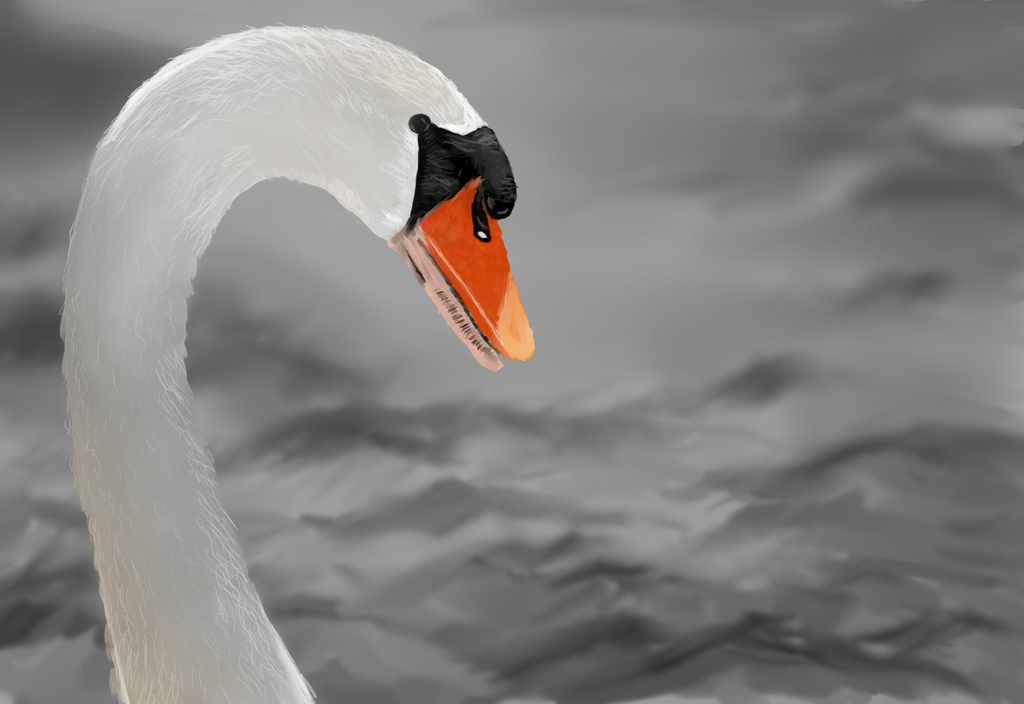 Most recent image: Swan study