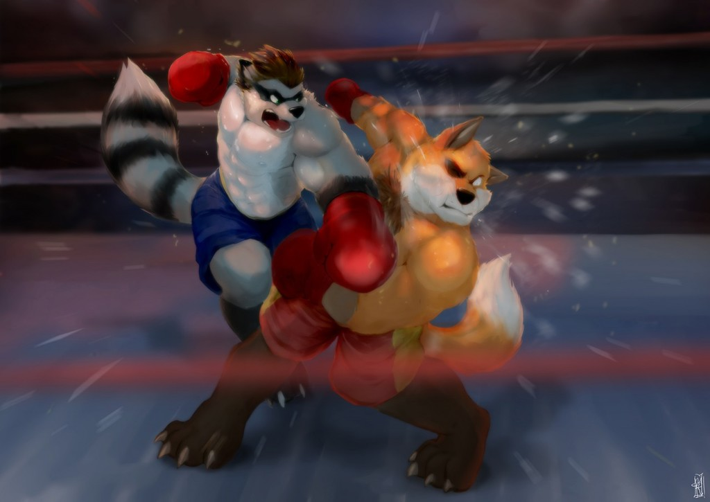 Featured image: Boxing with a wolfcoon