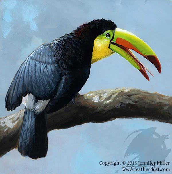 Toucan Sunbath - Keel-Billed Toucan