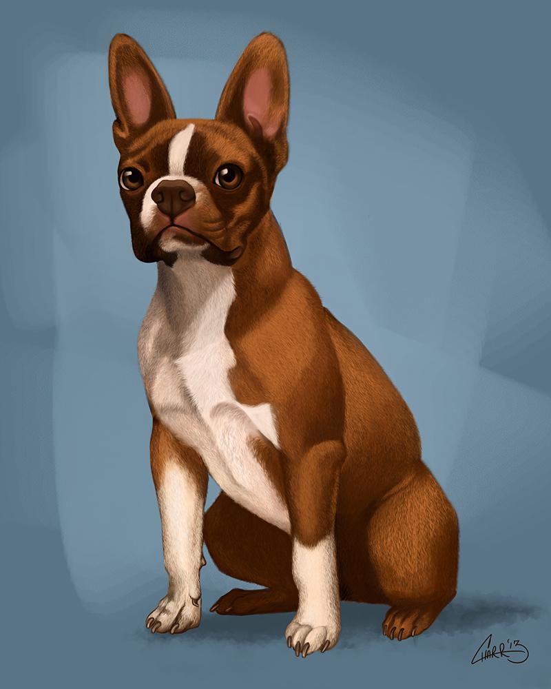 Oz the Boston Terrier Commission