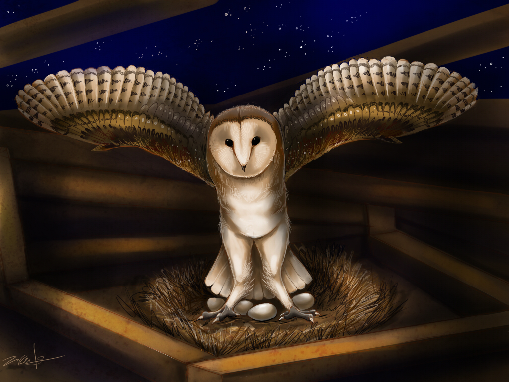 Featured image: Barn Owl