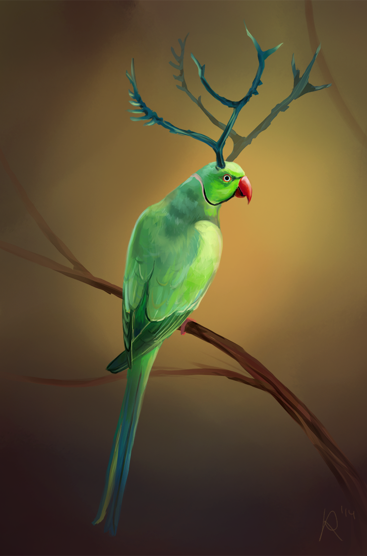 Most recent image: Xmas Birds 23: Rose-Ringed Parakeet
