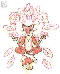 meditation fox