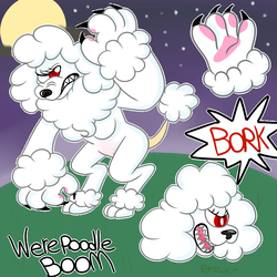 Boom the Werepoodle