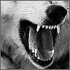 avatar of 8aku