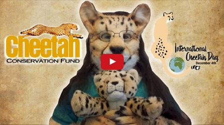 (Video) International Cheetah Day Livestream & Giveaways!
