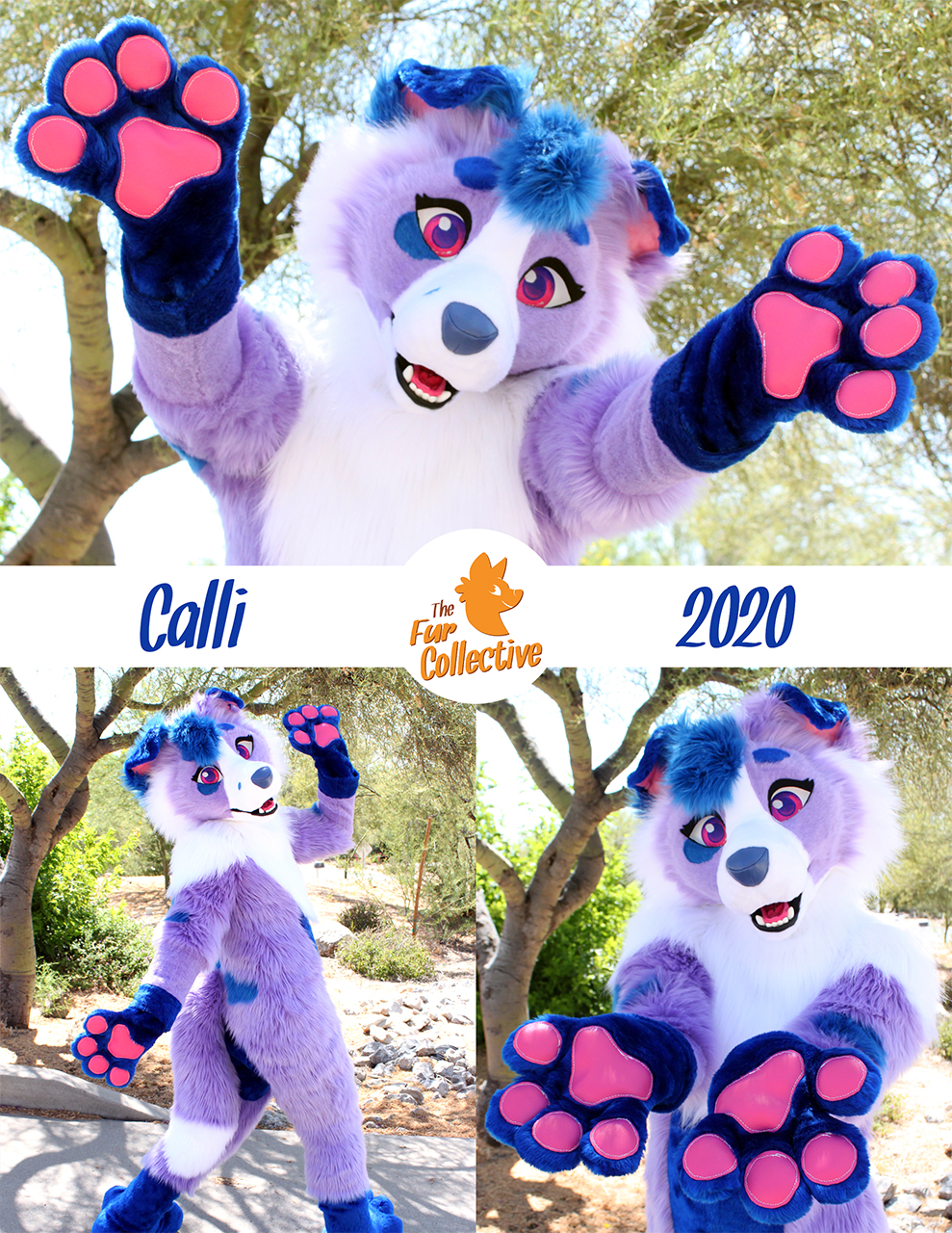 Most recent image: Calli the Collie!