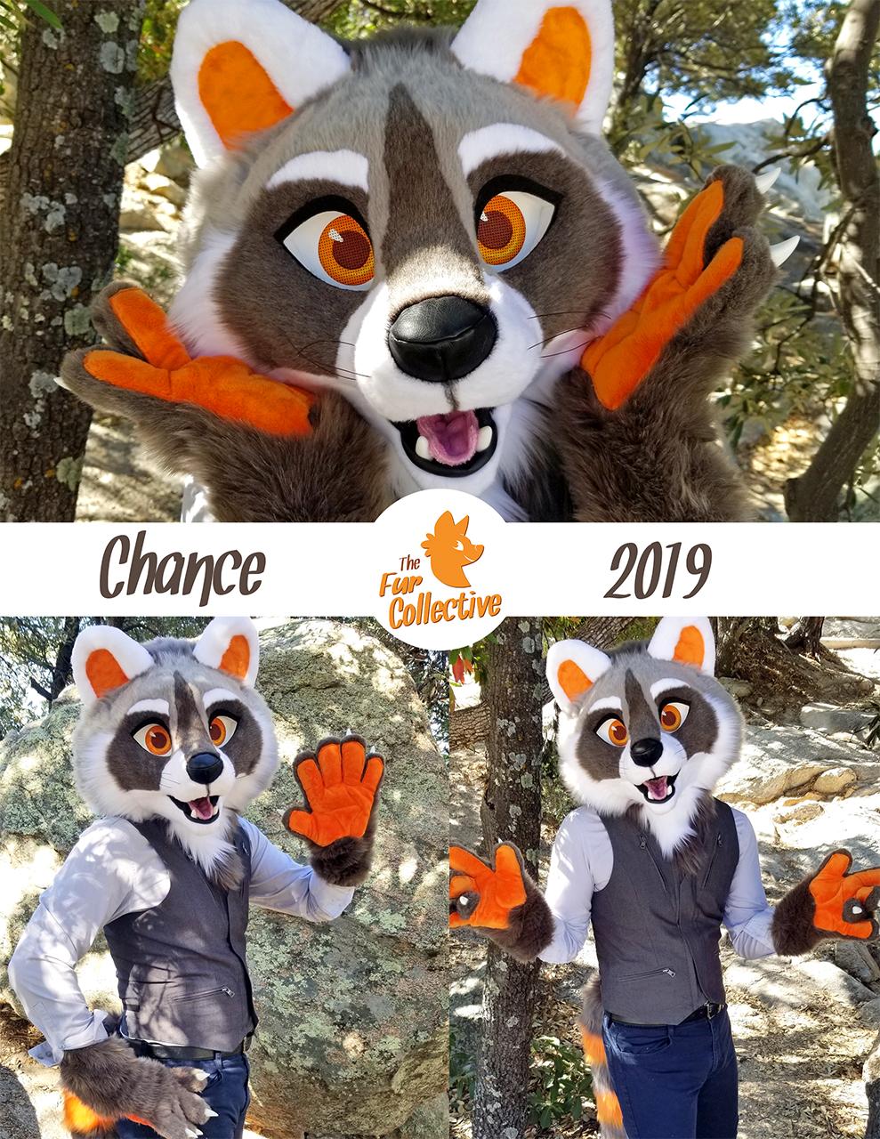 Chance the Raccoon!