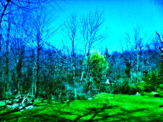 Astral Travel Through The Woods