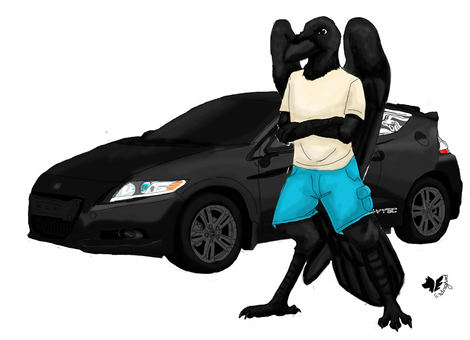 Raven and the Car