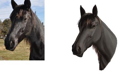Horse Study