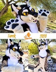 Tarek the Wolf!