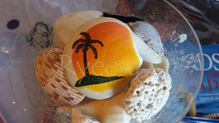 Sunset Shell - For Sale!