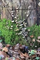 Mushroom settlement
