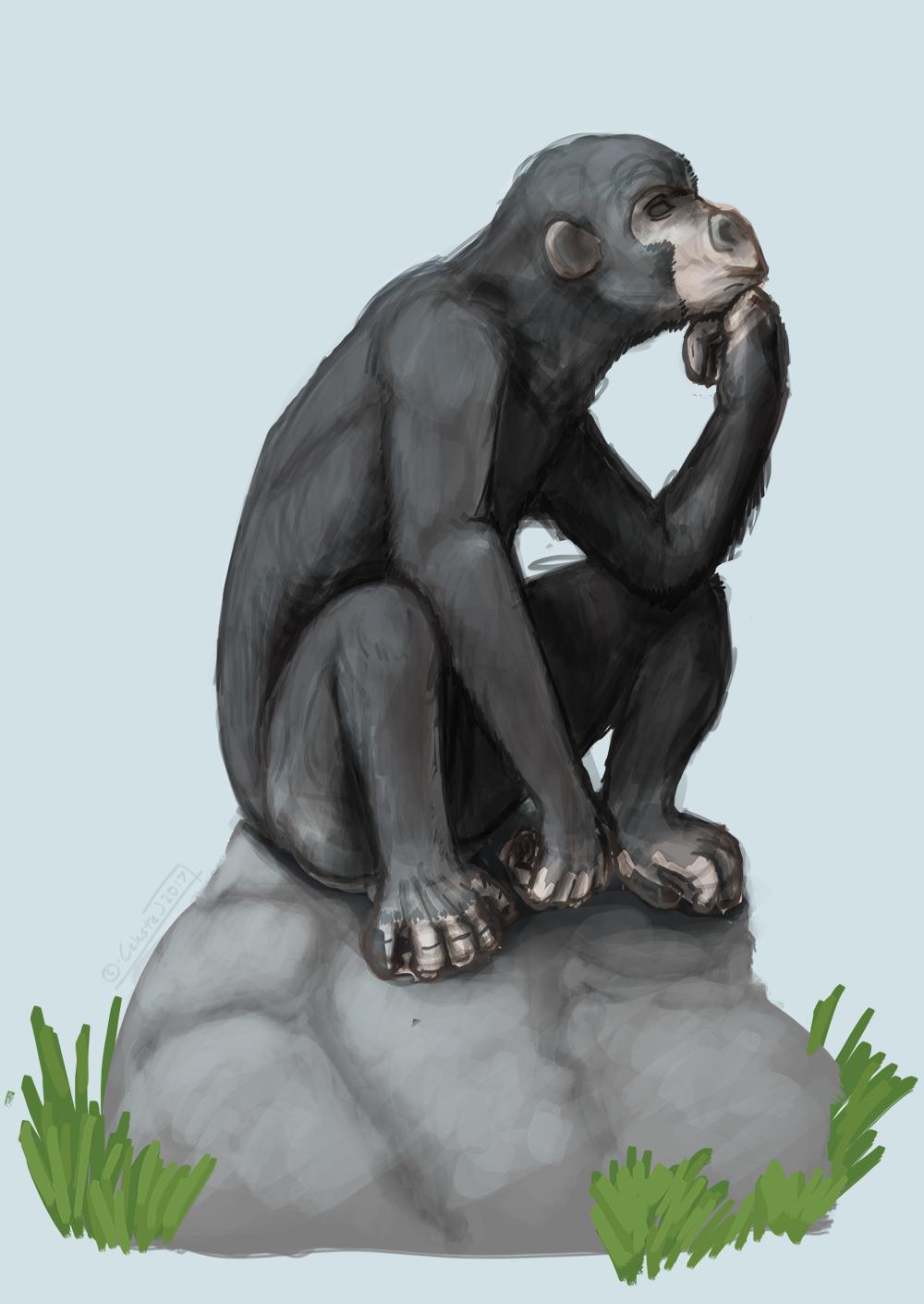 chimp sketch