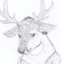 A deer dude