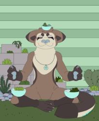 CO - Find Your Zen