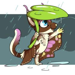 Rainy Cheeb