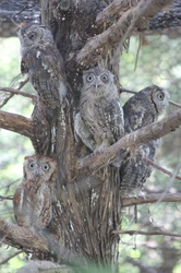 What is that smell? (owls)