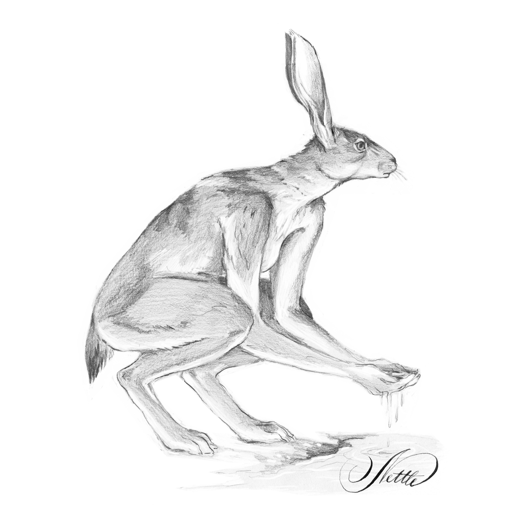 Crouching Hare Sketch