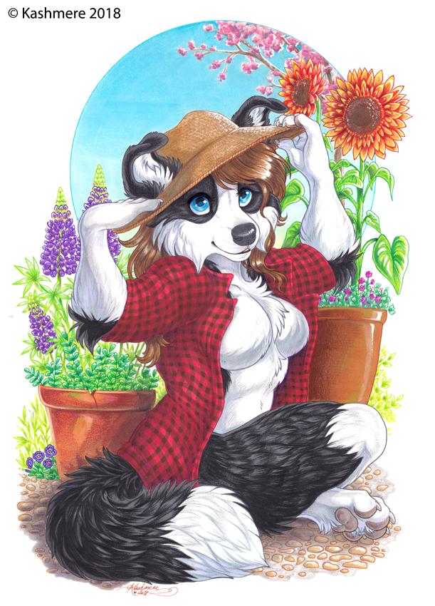 Garden Collie