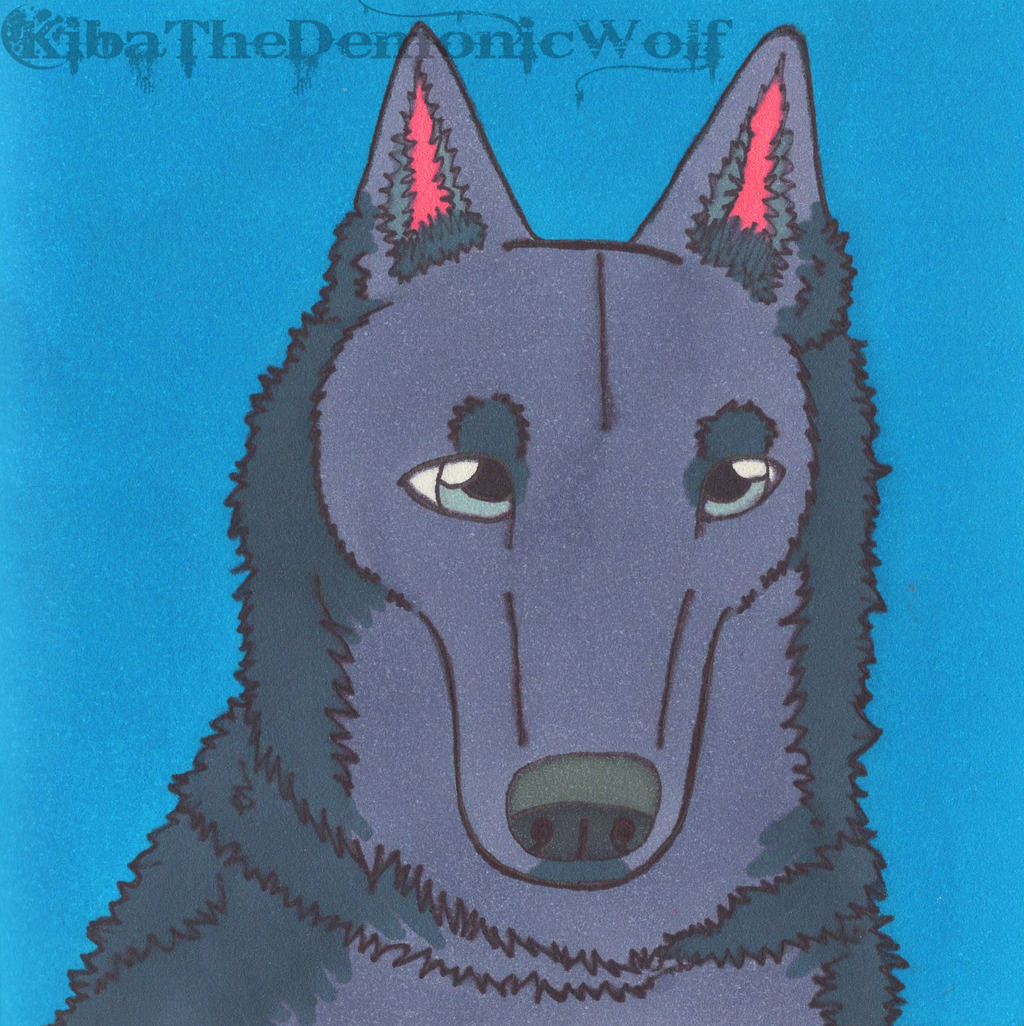 Bunch of Doggos - Blue Bay Shepherd