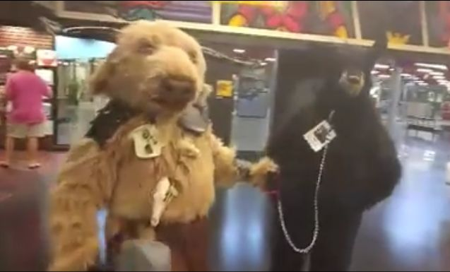 How do you take a bear out for a walk? (VIDEO LINK)