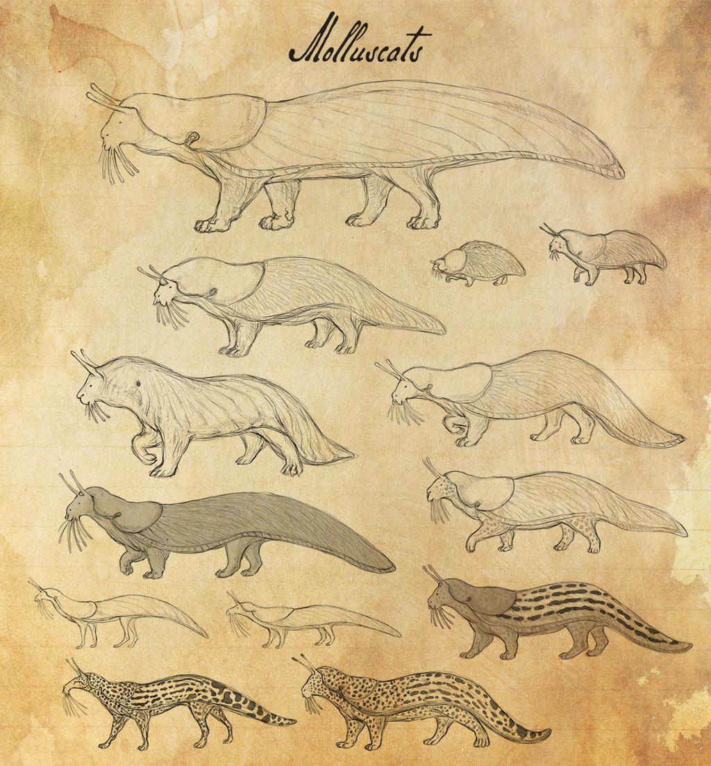 Molluscats